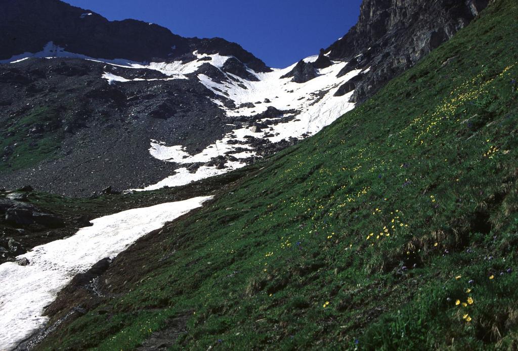 vista dal Bivacco Savoia verso il Col de Valsorey (9-7-1994)