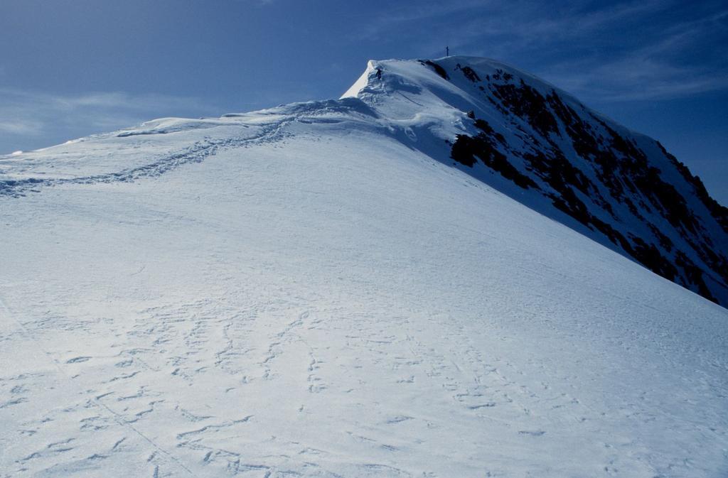 la cresta nevosa finale che conduce in vetta al Similaun (21-6-1998)