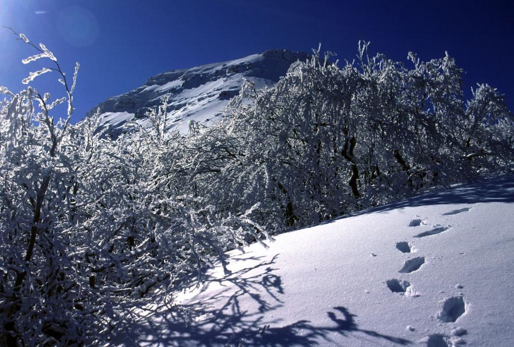 ambientino incantevole lungo la prima parte della cresta NO del Monte Giovo (11-2-2001)