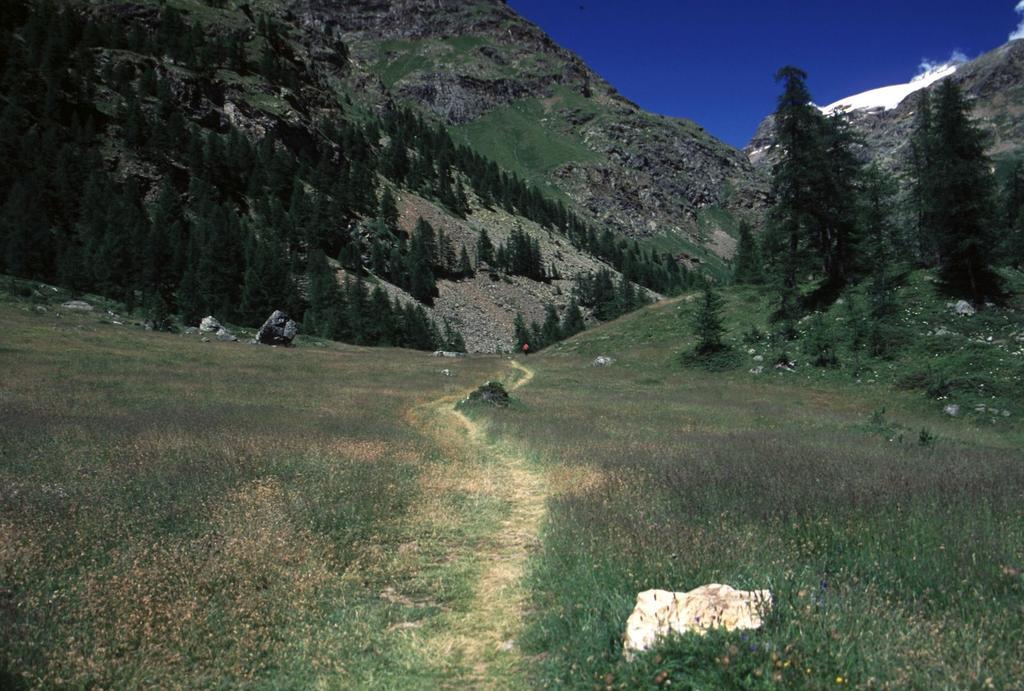 il sentiero lungo i prati di Prarayer (5-7-2003)