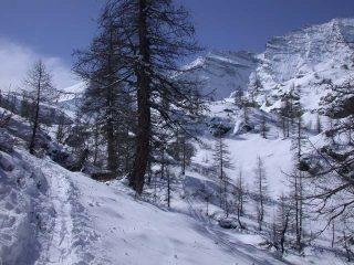 Nel bosco, vista sulla Parete Nord della Levannetta (mt. 3439) e della Levanna Centrale (mt. 3619)