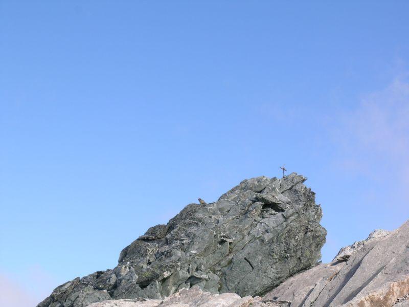 Marmotta in vetta al Monte Maniglia