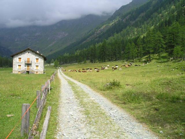 il pin azaria e le mucche di elvis.