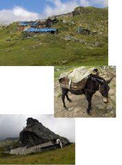 alpeggio arietta - simpatico incontro - San Besso