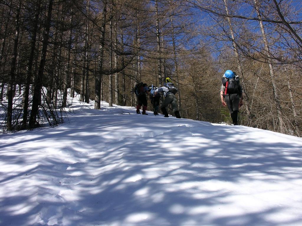 salendo nel Bosco delle Navette (12-3-2006)