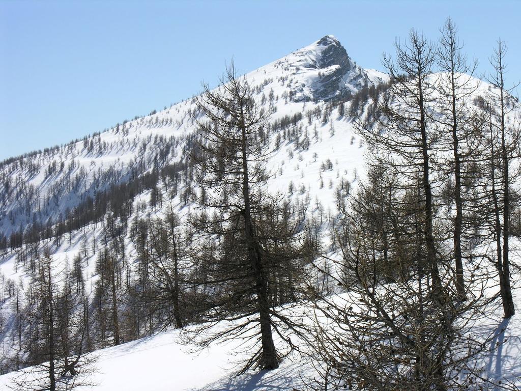 il bosco si dirada e spunta la Cima Missun (12-3-2006)