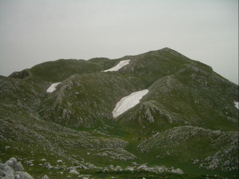 Gallinola (Monte la) da Campitello Matese per la cresta NO 2006-06-20