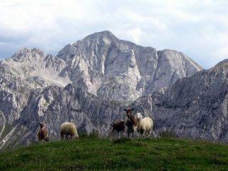Cima della bacchetta (Concarena) e capre orobike dal Monte Campione