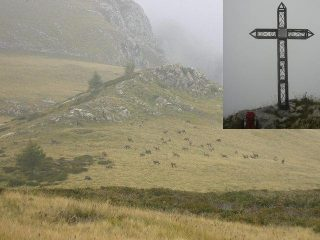 camosci al Pian Camozzera e croce di vetta