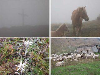Croce al colle dei Giassit, cavalli, stelle alpine al Bec di Nona, alpe Boses