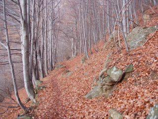 il bellissimo bosco di faggi