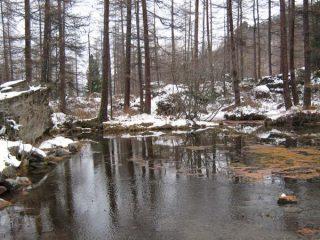Nei pressi del lago di Pellaud