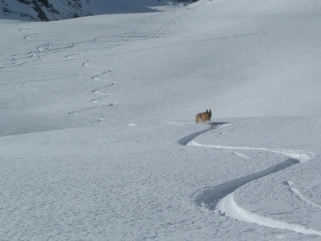 Kira in neve fresca