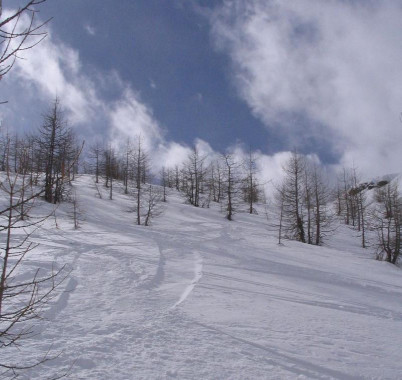 il bosco sulla destra dell'alpe misanco