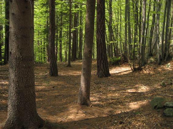 Il bosco che si attraversa arrivando dal Cresto