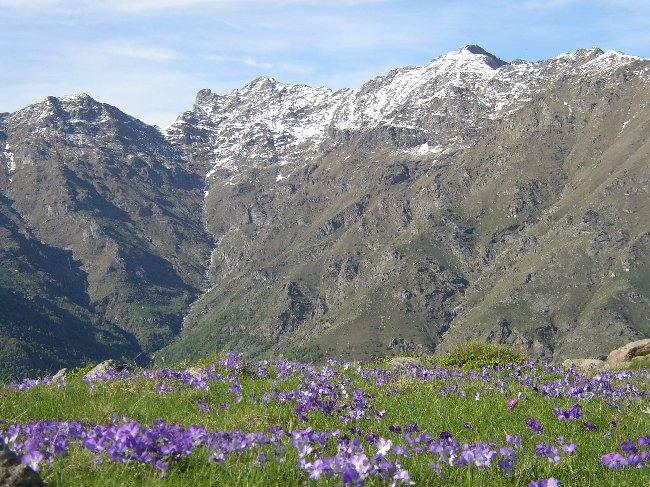 I verdissimi prati fioriti della Valchiusella.
