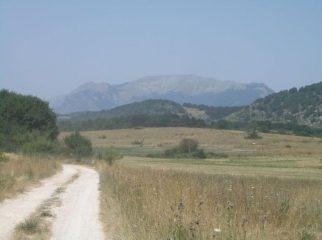 La forestale di Piano Cerreto,con panorama sul Mileto (Morrone)