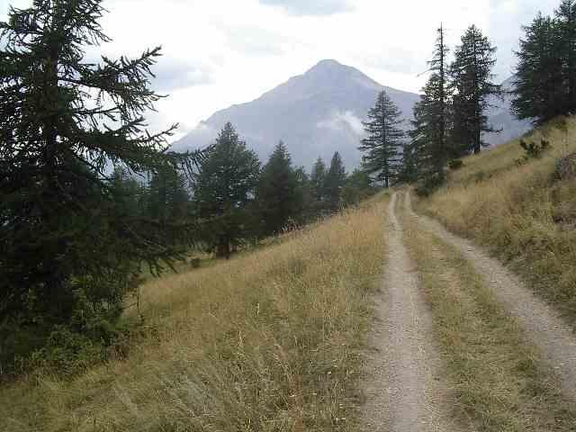 Tratto di pista forestale tra i pascoli, con Chaberton sullo sfondo