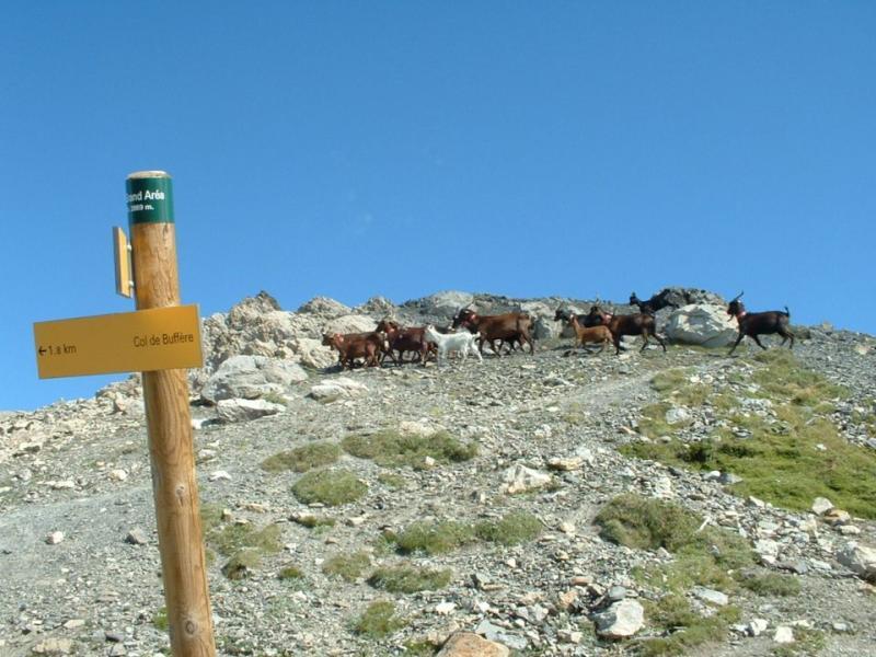 un gruppo di.... indigeni, nei pressi della vetta.
