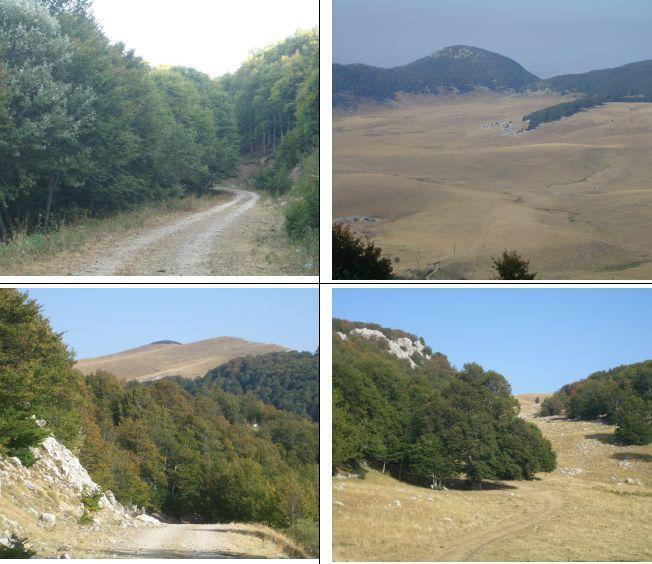 1)nel Bosco Carboniere 2)La piana dal valico di q.1674 3)Vetta da Pietraflora 4)Nella valletta Pietraflora
