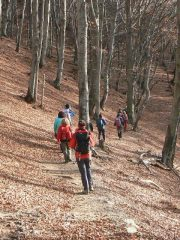 passeggiando nei boschi in versione autunnale