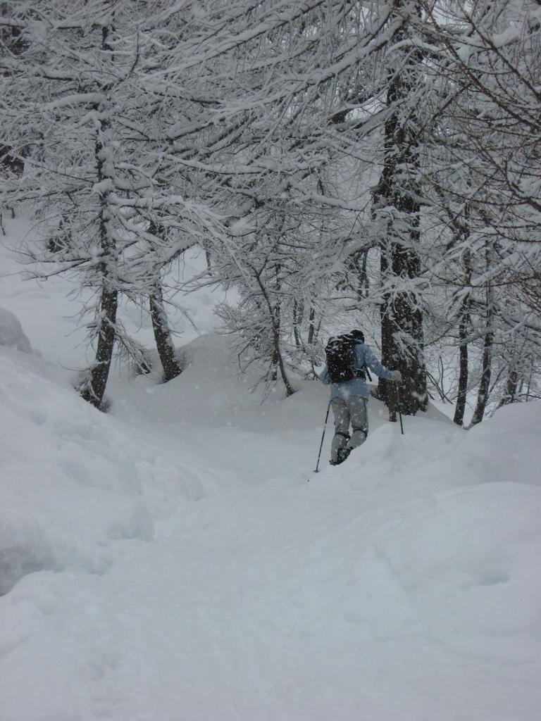 Il bosco verso Alpe Misanco