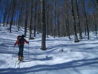 il magnifico bosco secolare del S.Rocco