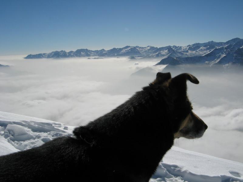 pimpa guarda l'orizzonte
