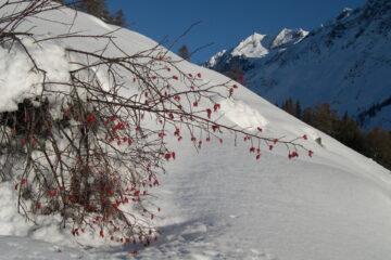 Il Mont Vélan   I   Le Mont Velan   I   Mont Vélan   I   Der Mont Velan   I   El Mont Velan