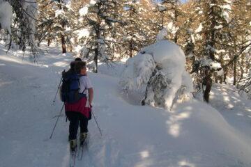 Nel bosco innevato   I   Dans la forêt enneigée   I   In the snowy wood   I   Im verschneiten Wald   I   En el bosque nevado