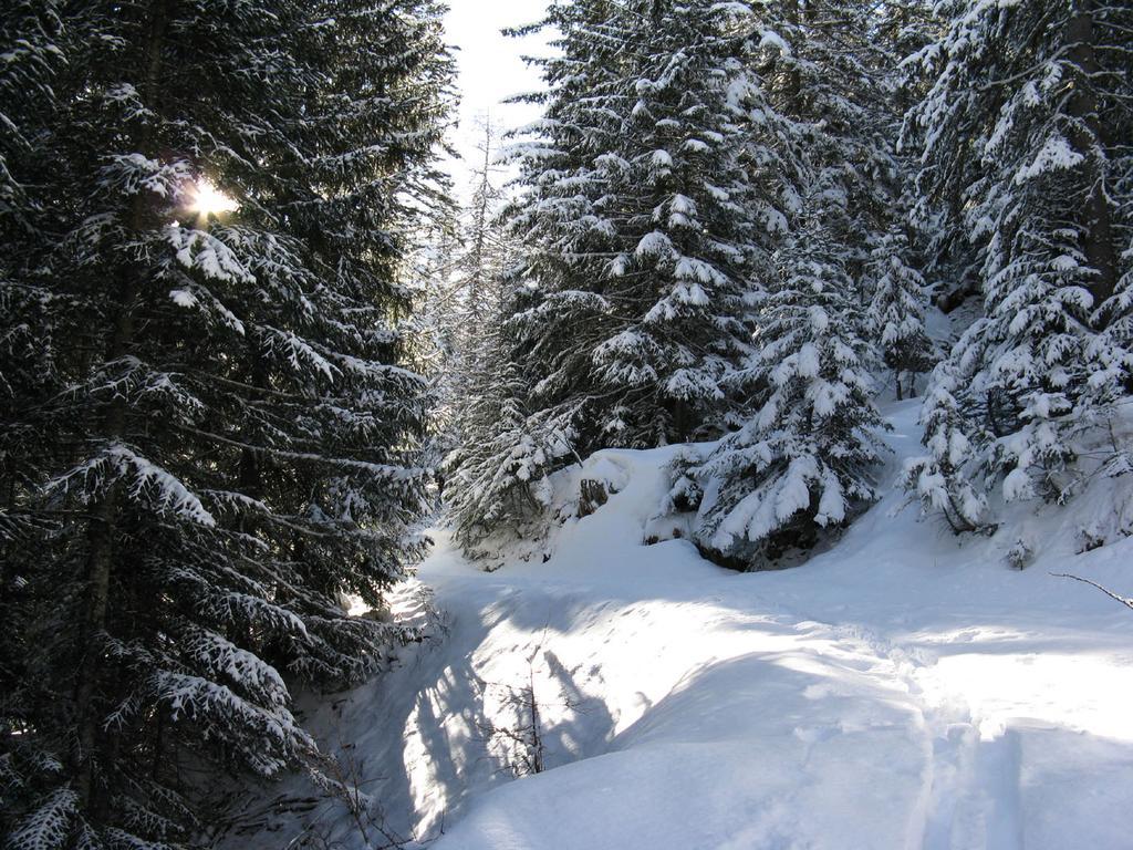 Nel bosco primaverile
