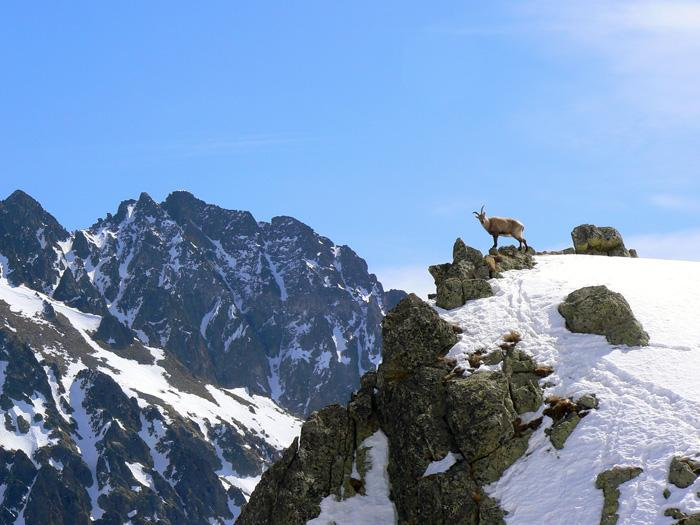 alta montagna