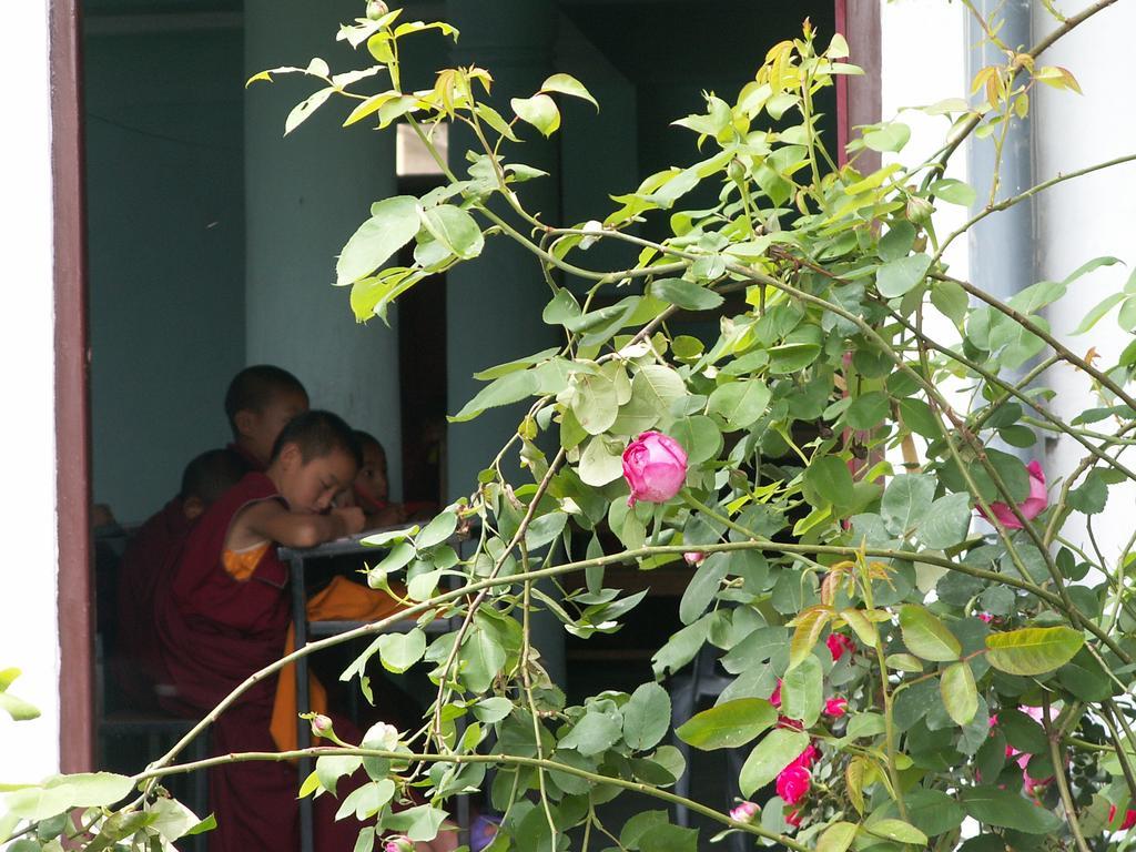 monaci ain aula
