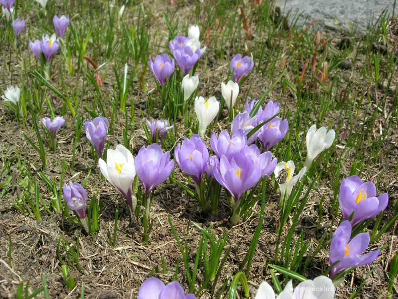 primavera.. foto m.conti