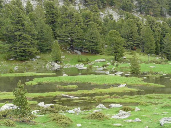 il laghetto Bagnour e gli splendidi  cembri