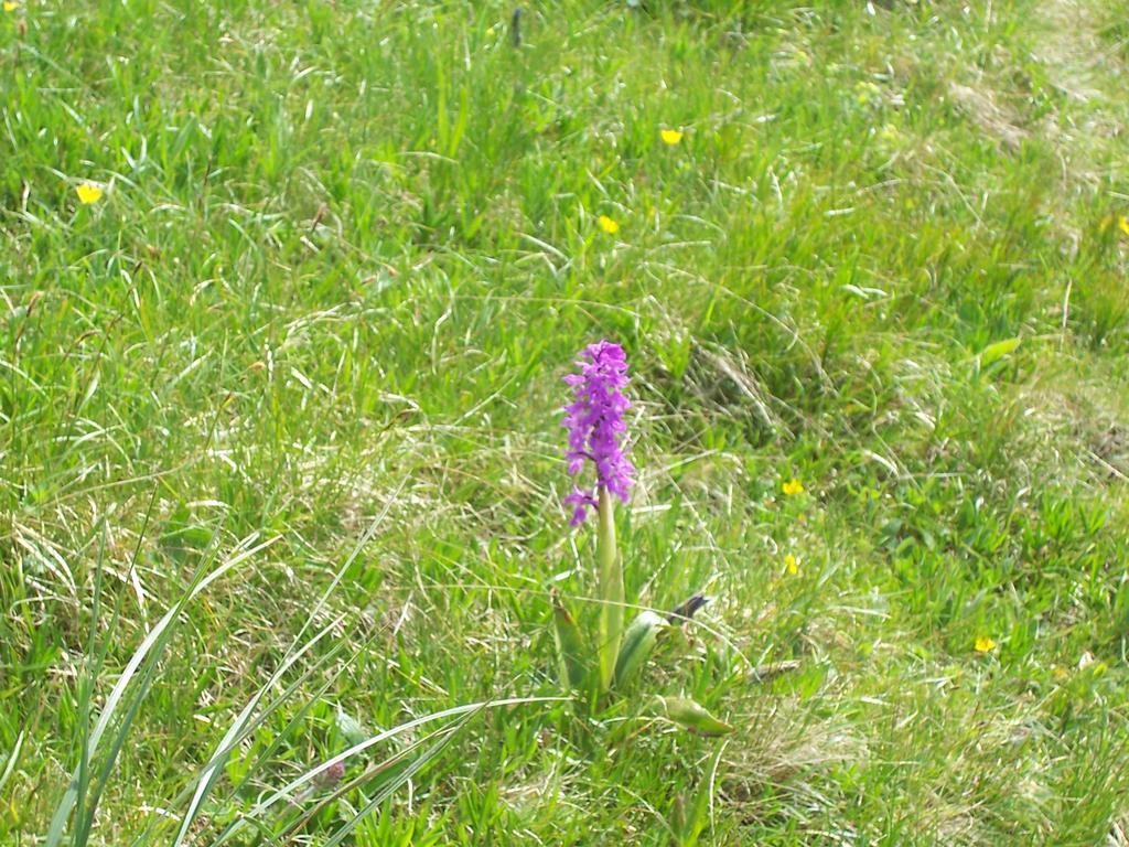 orchidea a quota 2000m circa