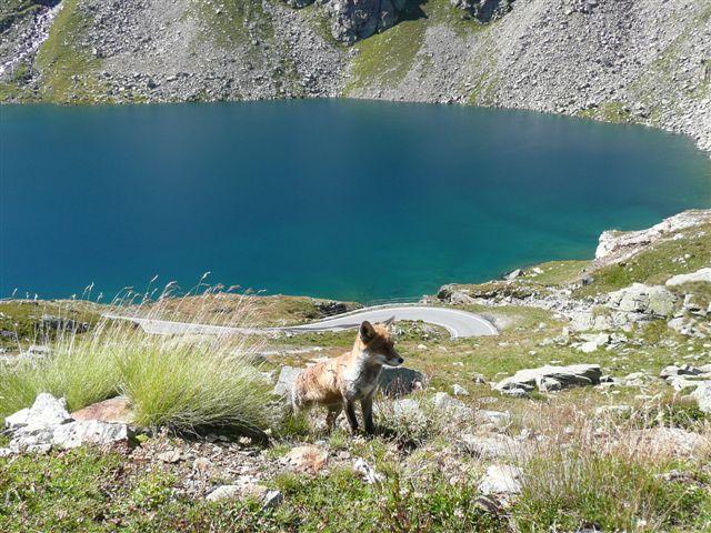 Lago Agnel.