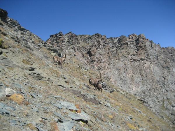 parte superiore del percorso, con la cresta finale