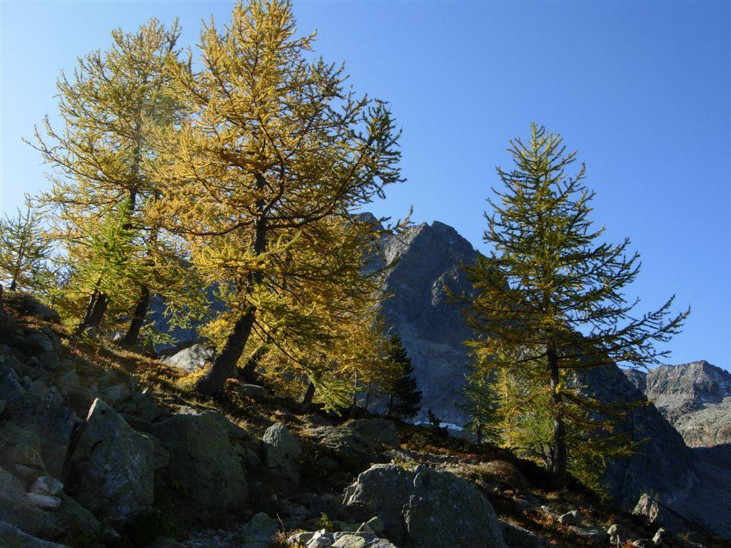 I caldi colori dell'autunno salendo