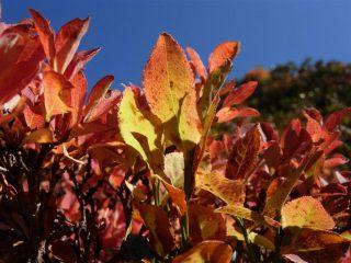 I caldi colori che solo l'autunno sa regalarci