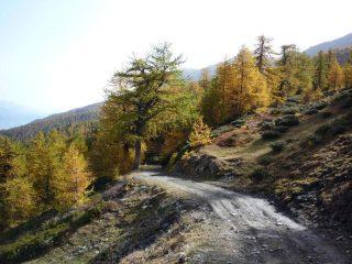 Il margine del bosco sopra l'Alpe Arguel
