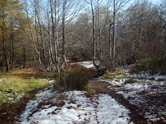 un po di neve tra i faggi
