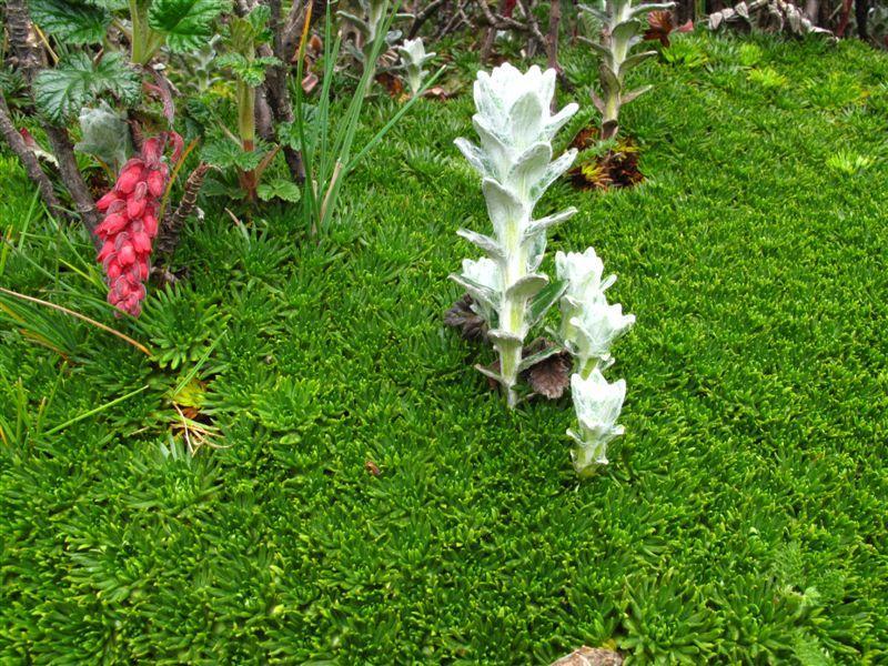 Giardino botanico in quota