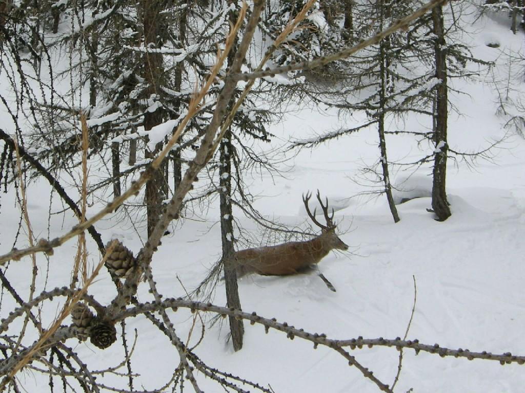 cervo nel bosco