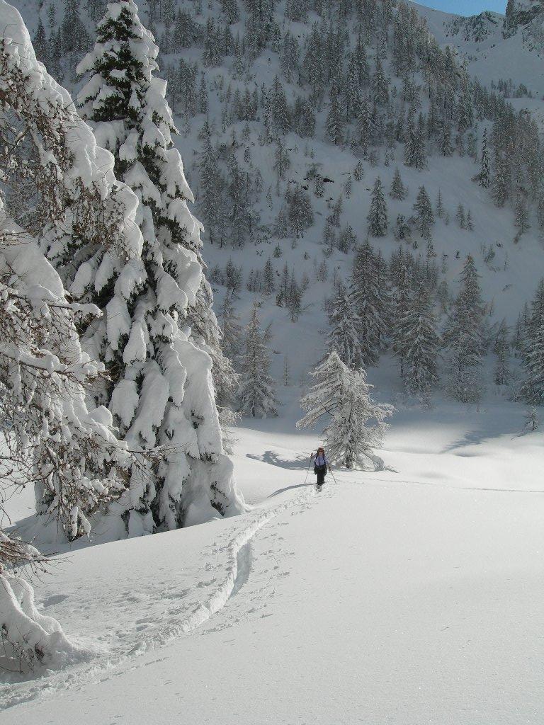 abete carico di neve