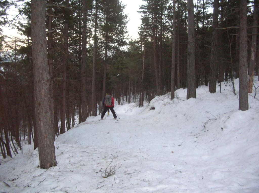 Discesa nel bosco di pino uncinato.