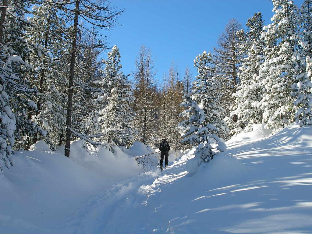 La traccia nel bosco