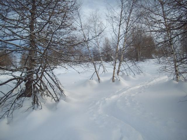 steppa Russa o bosco della Val Po??