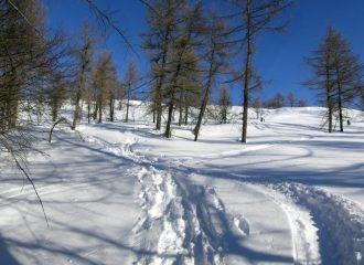 bosco parte superiore