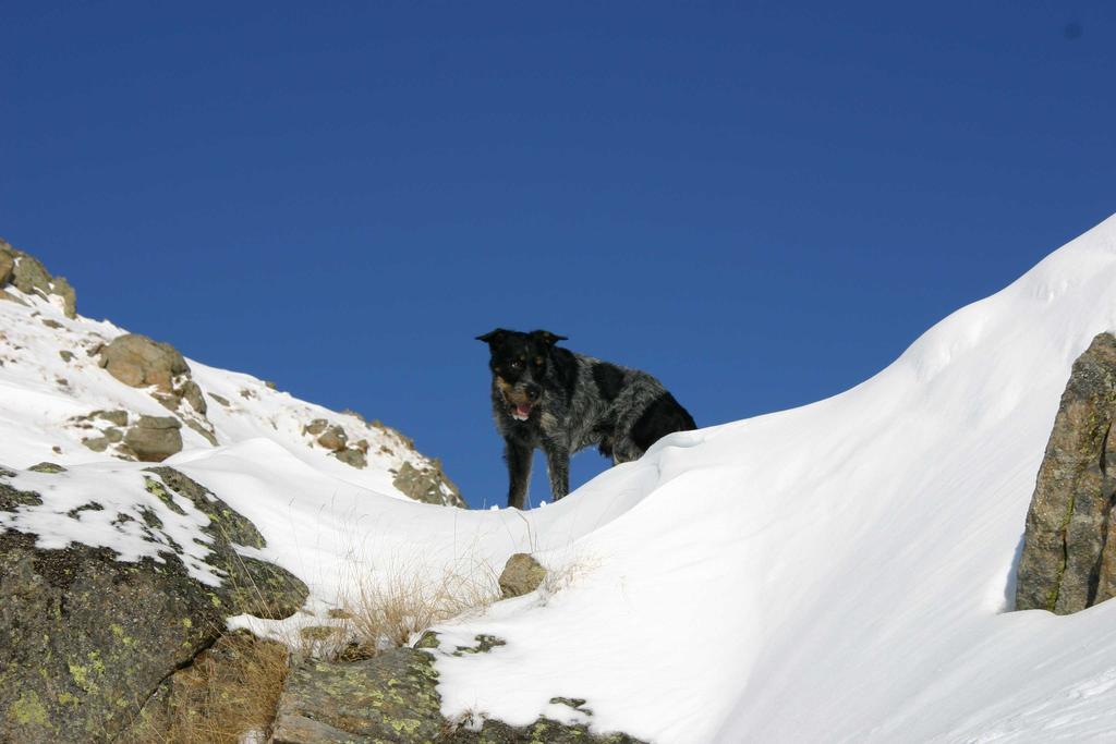 Toby (il cane)